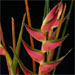 vase of heliconia and bamboo poles