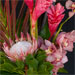 festoon of pink ginger, mauve cymbidiums, king protea, tricolor dracena and monstera leaves